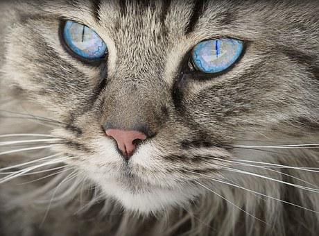 Sklep z kuwetami dla kota