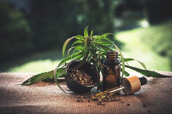 Skuteczne leczenie olejem konopnym