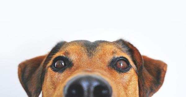 praktyczna bandana dla psa